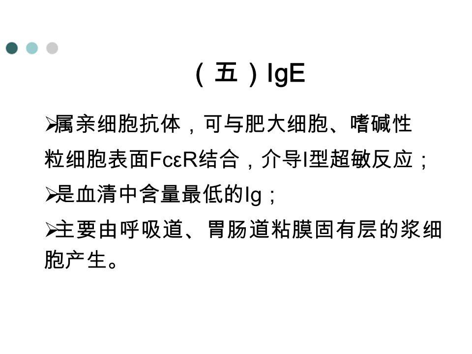 (五) IgE  属亲细胞抗体,可与肥大细胞、嗜碱性 粒细胞表面 FcεR 结合,介导 I 型超敏反应;  是血清中含量最低的 Ig ;  主要由呼吸道、胃肠道粘膜固有层的浆细 胞产生。