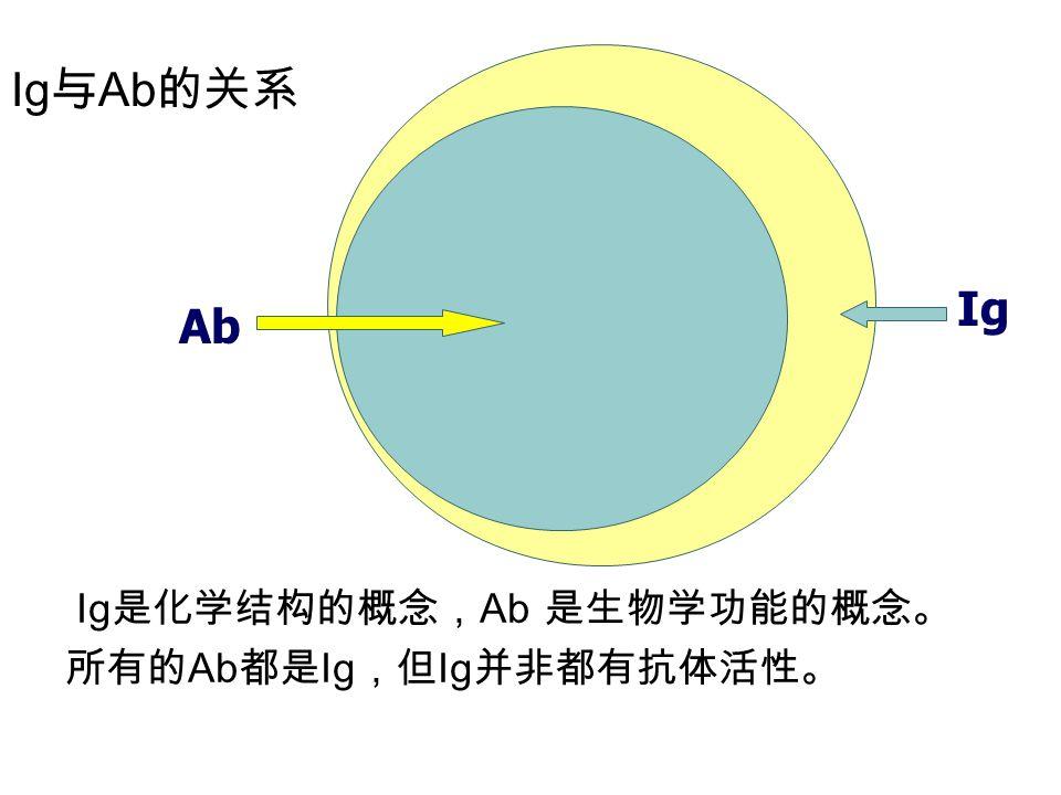 Ig 与 Ab 的关系 Ig 是化学结构的概念, Ab 是生物学功能的概念。 所有的 Ab 都是 Ig ,但 Ig 并非都有抗体活性。 Ig Ab