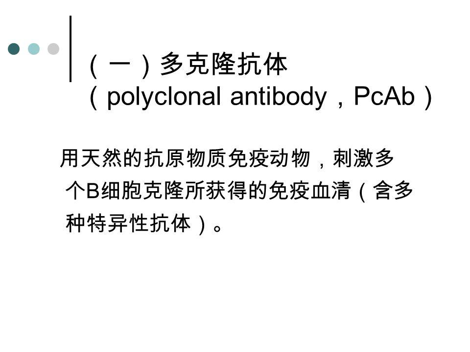 (一)多克隆抗体 ( polyclonal antibody , PcAb ) 用天然的抗原物质免疫动物,刺激多 个 B 细胞克隆所获得的免疫血清(含多 种特异性抗体)。