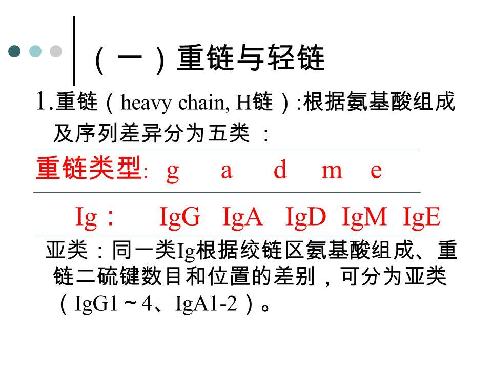 1. 重链( heavy chain, H 链) : 根据氨基酸组成 及序列差异分为五类 : 重链类型 : g a d m e Ig : IgG IgA IgD IgM IgE 亚类:同一类 Ig 根据绞链区氨基酸组成、重 链二硫键数目和位置的差别,可分为亚类 ( IgG1 ~ 4 、 IgA1-2