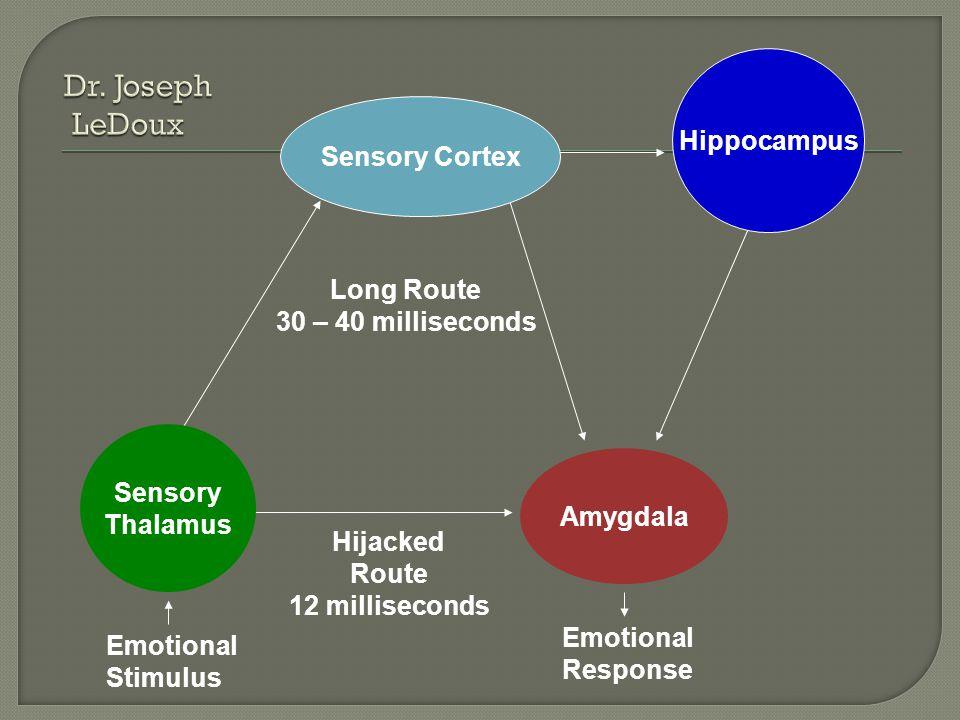 Amygdala Hippocampus Emotional Stimulus Emotional Response Long Route 30 – 40 milliseconds Hijacked Route 12 milliseconds Sensory Thalamus Sensory Cortex