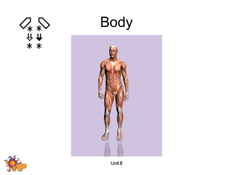 Unit 8 Body