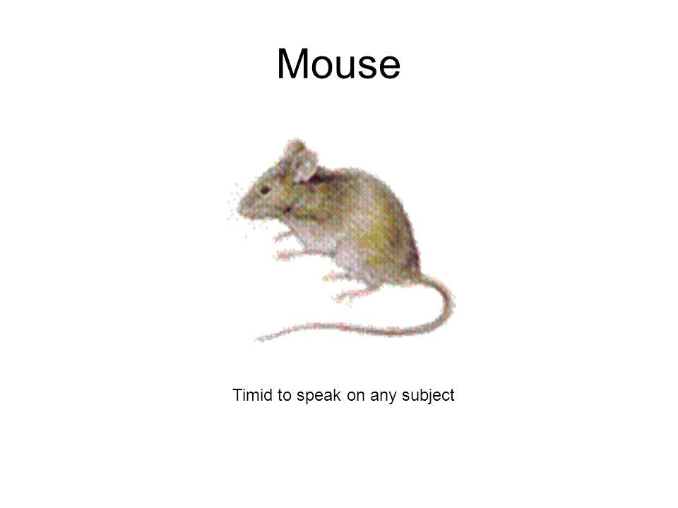 Mouse Timid to speak on any subject