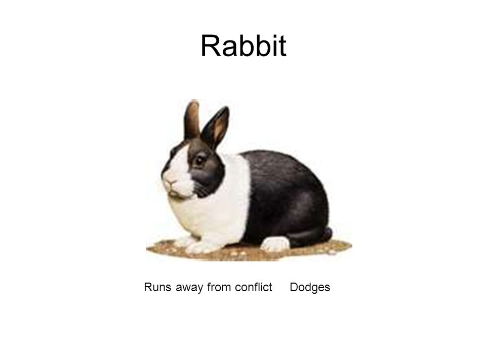 Rabbit Runs away from conflictDodges