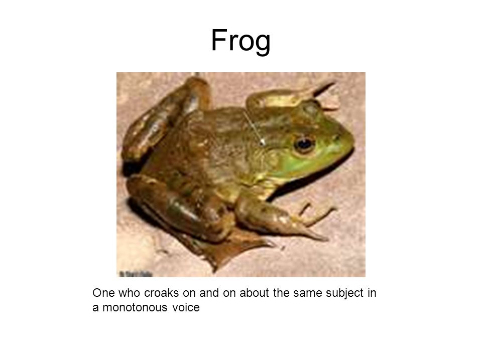Frog One who croaks on and on about the same subject in a monotonous voice