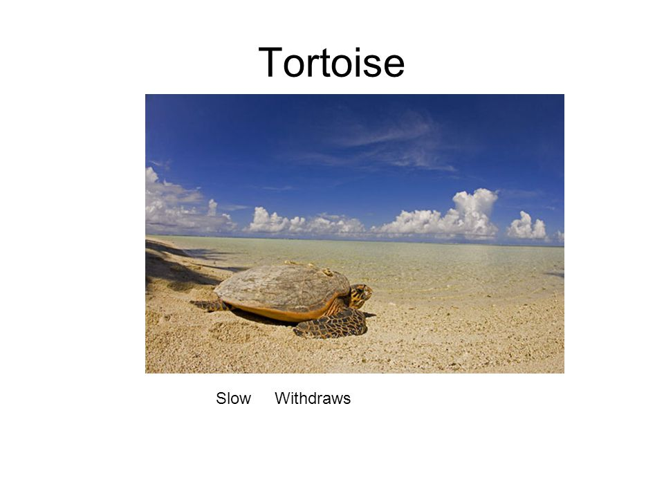 Tortoise Slow Withdraws