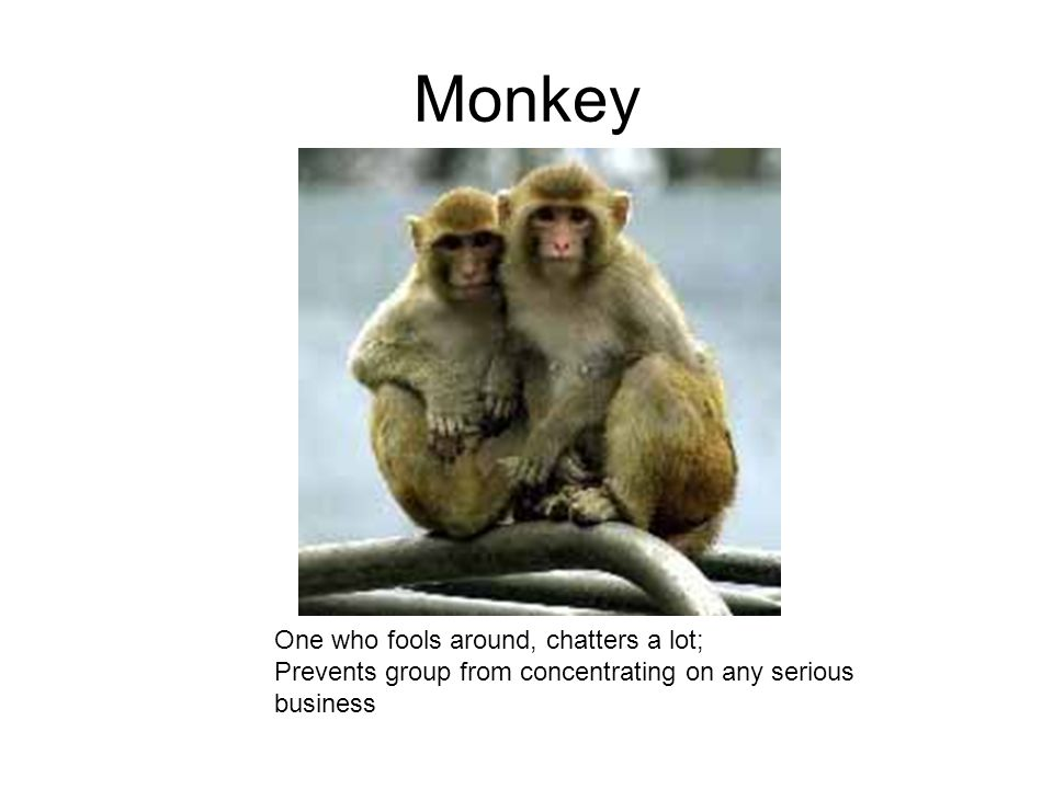 Monkey One who fools around, chatters a lot; Prevents group from concentrating on any serious business