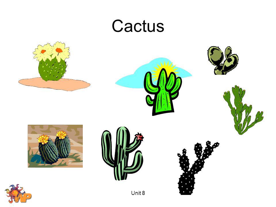 Unit 8 Cactus