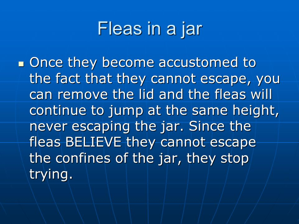 Fleas in a jar Once they become accustomed to the fact that they cannot escape, you can remove the lid and the fleas will continue to jump at the same height, never escaping the jar.
