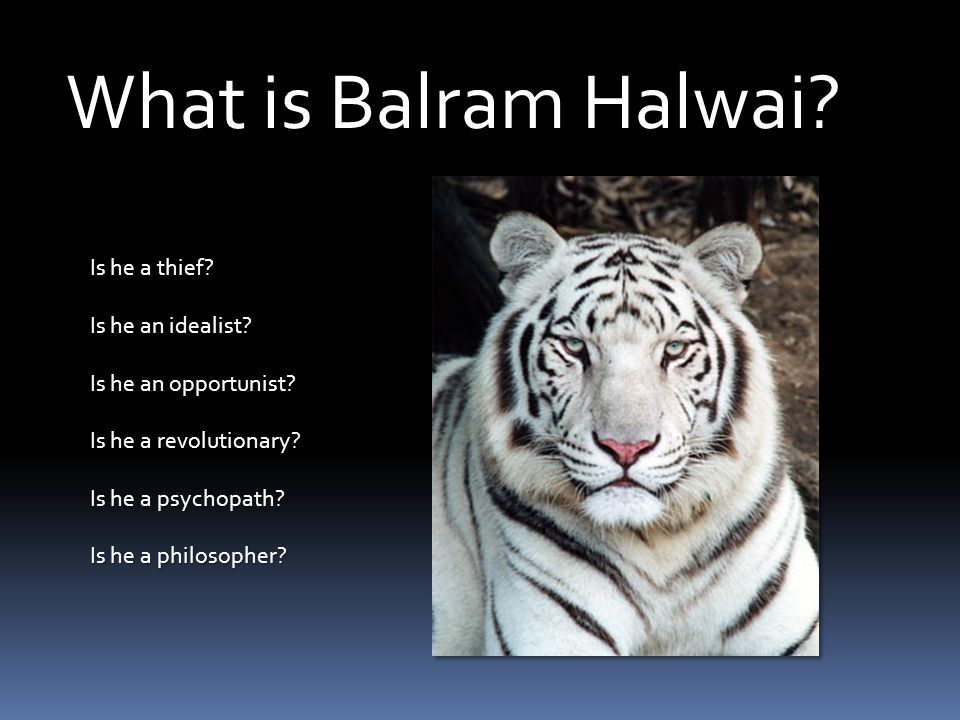 What is Balram Halwai? Is he a thief? Is he an idealist? Is he an opportunist? Is he a revolutionary? Is he a psychopath? Is he a philosopher?