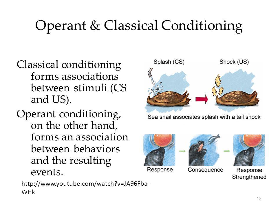 Operant Conditioning I.Operant Conditioning A.Law of Effect B.Shaping C.Reinforcement 1.Types a.Positive b.Negative PositiveNegative ReinforcementAdd goodRemove bad PunishmentAdd badRemove good