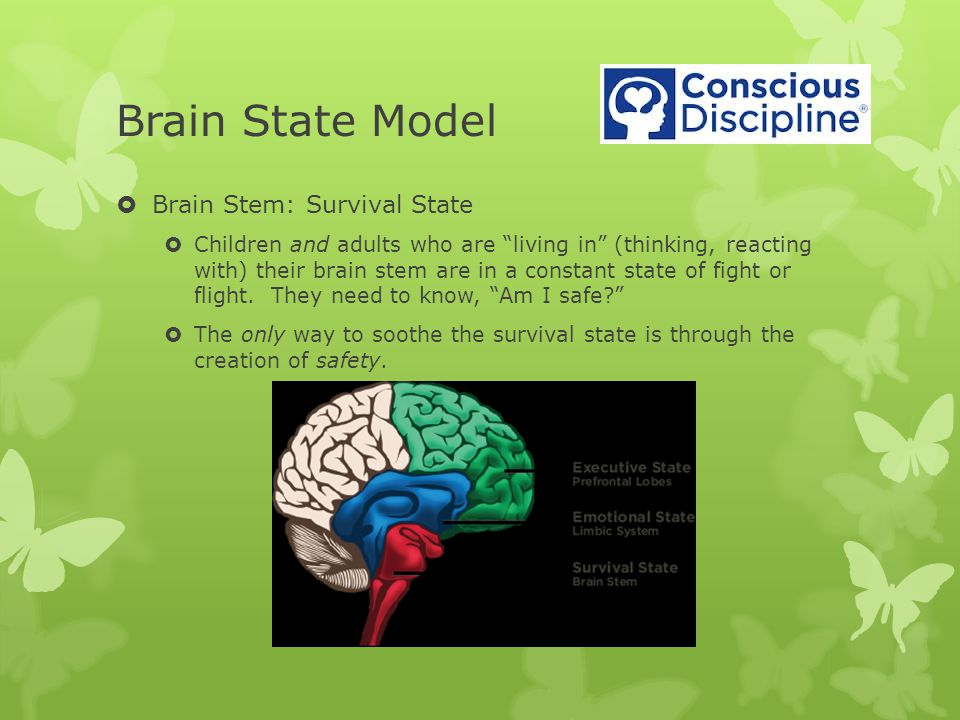 Brain State Model  Brain Stem: Survival State  Children and adults who are living in (thinking, reacting with) their brain stem are in a constant state of fight or flight.