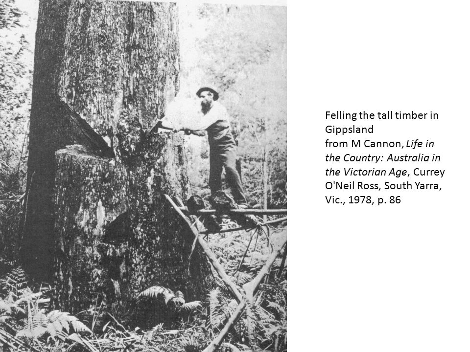 Felling the tall timber in Gippsland from M Cannon, Life in the Country: Australia in the Victorian Age, Currey O'Neil Ross, South Yarra, Vic., 1978,