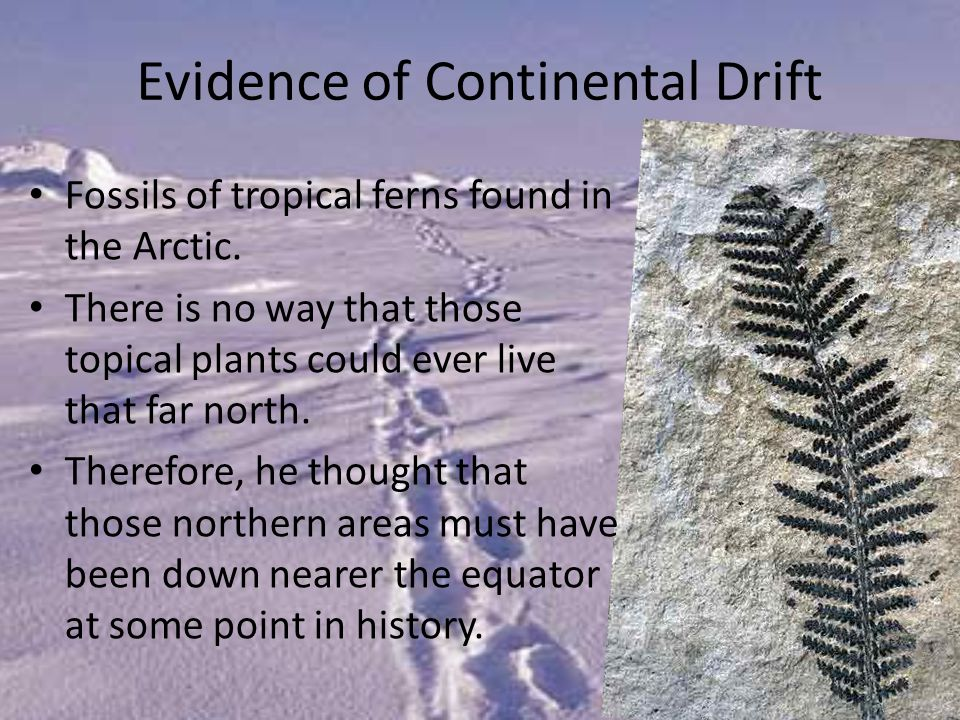Fossils of tropical ferns found in the Arctic.