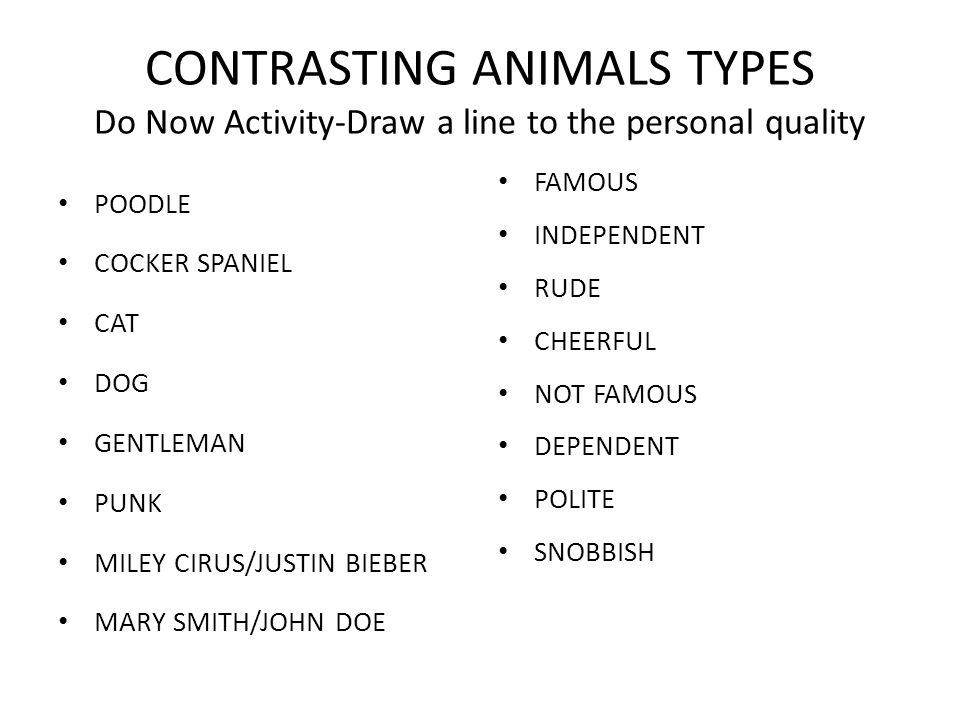 CONTRASTING ANIMALS TYPES Do Now Activity-Draw a line to the personal quality POODLE COCKER SPANIEL CAT DOG GENTLEMAN PUNK MILEY CIRUS/JUSTIN BIEBER M