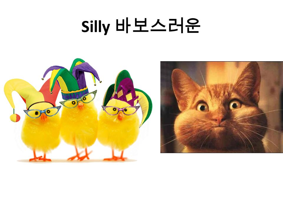 Silly 바보스러운