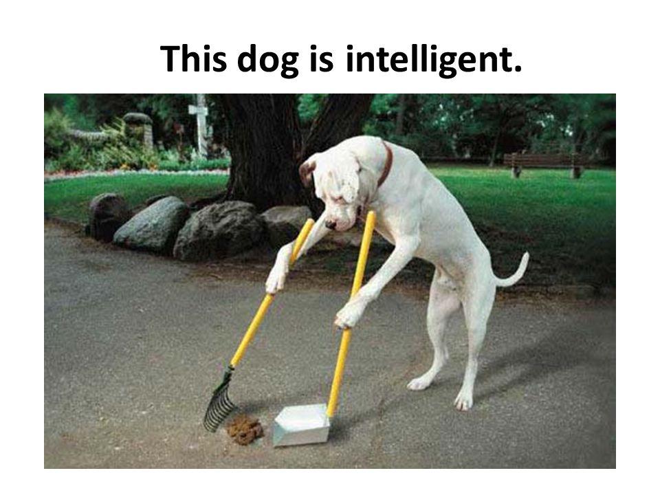 This dog isintelligent.