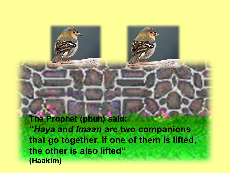 The Prophet (pbuh) said: Haya and Imaan are two companions that go together.