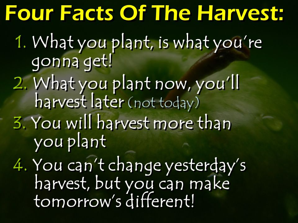 Four Facts Of The Harvest: 1. What you plant, is what you're gonna get.