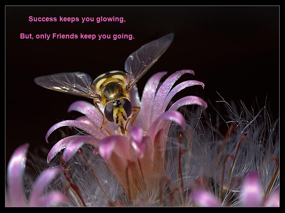 Happiness keeps you sweet, Trials keep you strong. Sorrows keep you Human, Life keeps you humble.
