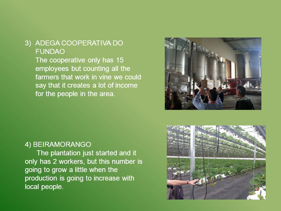 3)ADEGA COOPERATIVA DO FUNDAO The cooperative only has 15 employees but counting all the farmers that work in vine we could say that it creates a lot