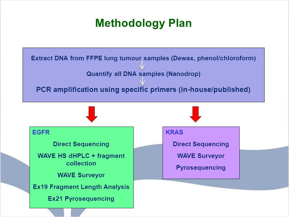 Methodology Plan Extract DNA from FFPE lung tumour samples (Dewax, phenol/chloroform) Quantify all DNA samples (Nanodrop) PCR amplification using spec