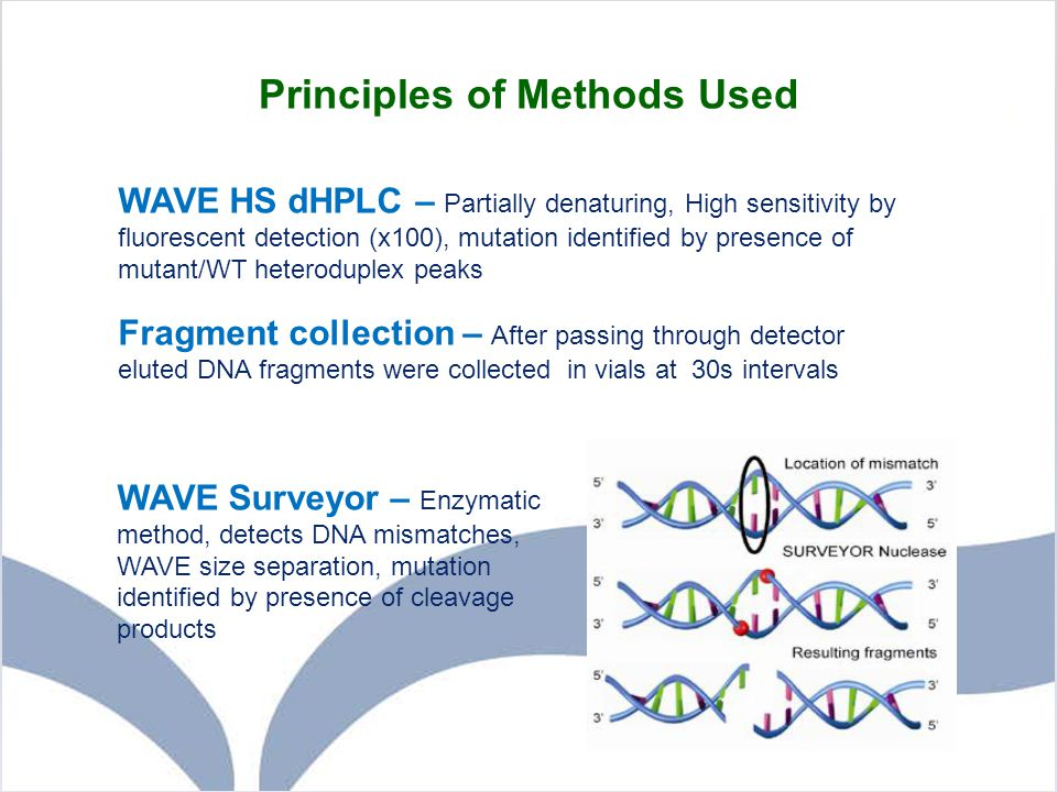 Principles of Methods Used WAVE Surveyor – Enzymatic method, detects DNA mismatches, WAVE size separation, mutation identified by presence of cleavage