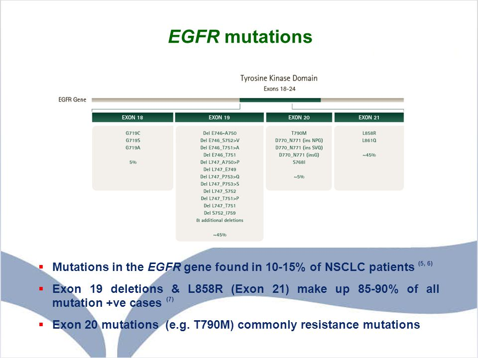 EGFR mutations  Mutations in the EGFR gene found in 10-15% of NSCLC patients (5, 6)  Exon 19 deletions & L858R (Exon 21) make up 85-90% of all mutat