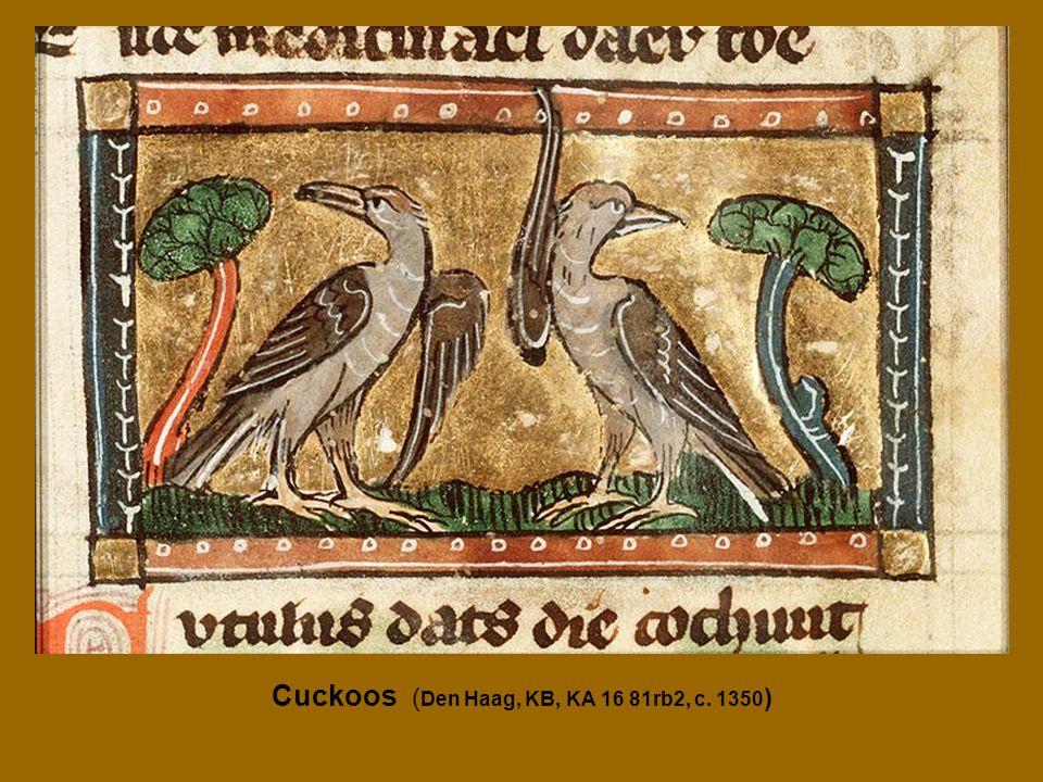 Cuckoos ( Den Haag, KB, KA 16 81rb2, c. 1350 )