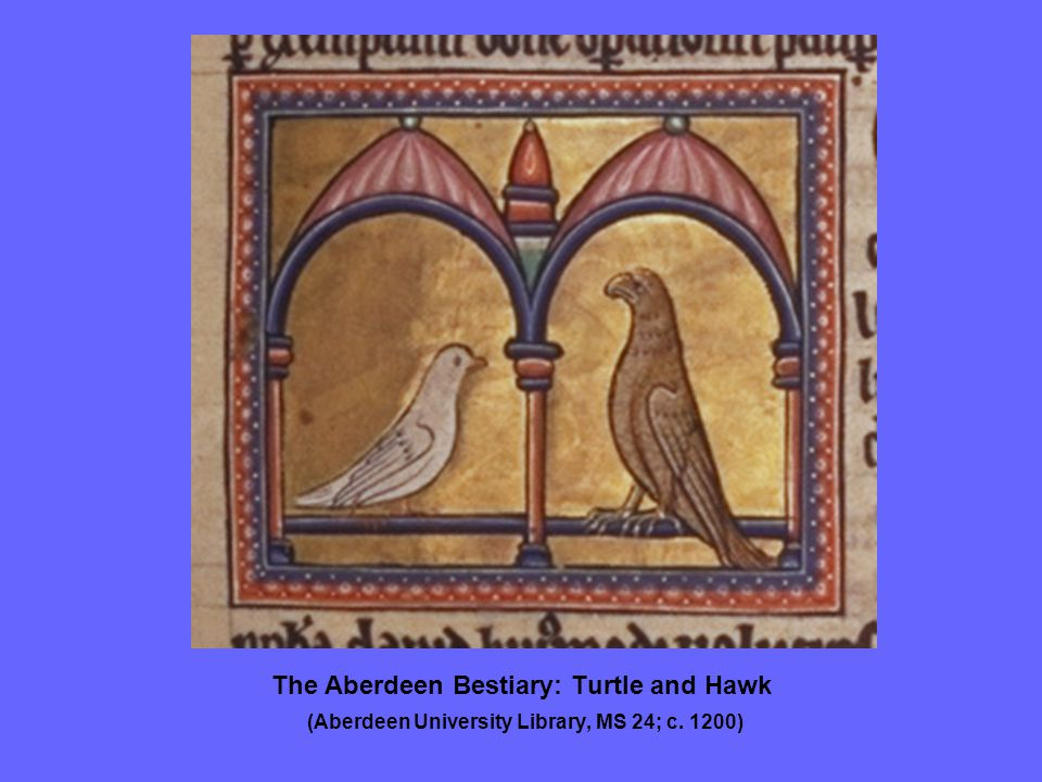 The Aberdeen Bestiary: Turtle and Hawk (Aberdeen University Library, MS 24; c. 1200)