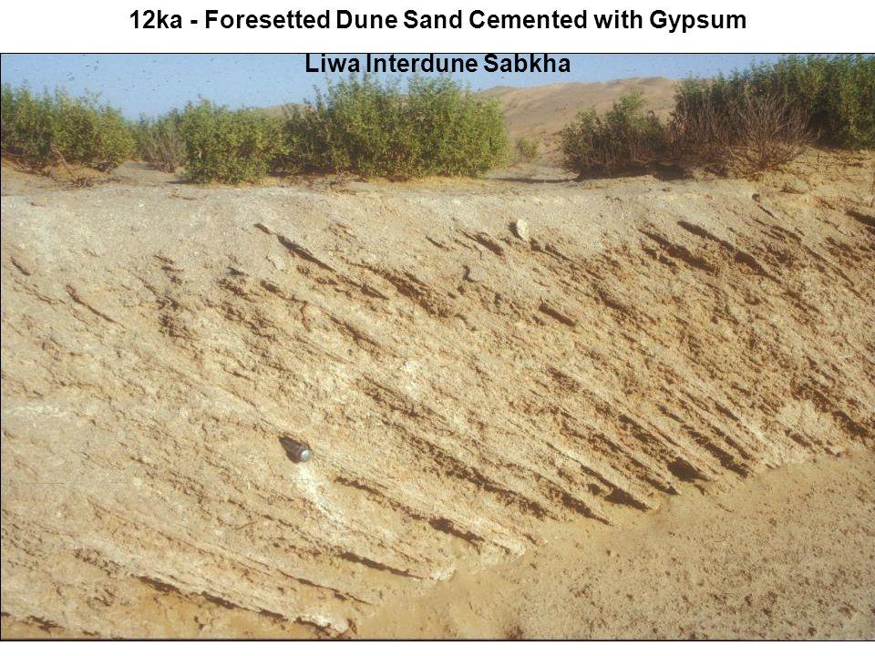 12ka - Foresetted Dune Sand Cemented with Gypsum Liwa Interdune Sabkha
