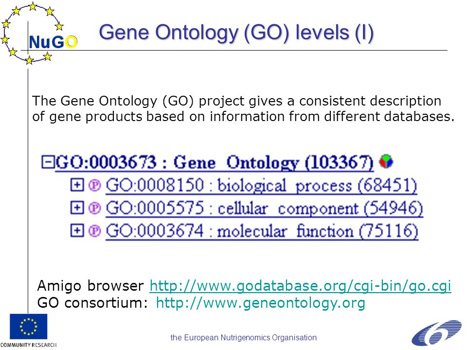 the European Nutrigenomics Organisation Amigo browser http://www.godatabase.org/cgi-bin/go.cgihttp://www.godatabase.org/cgi-bin/go.cgi GO consortium: http://www.geneontology.org The Gene Ontology (GO) project gives a consistent description of gene products based on information from different databases.