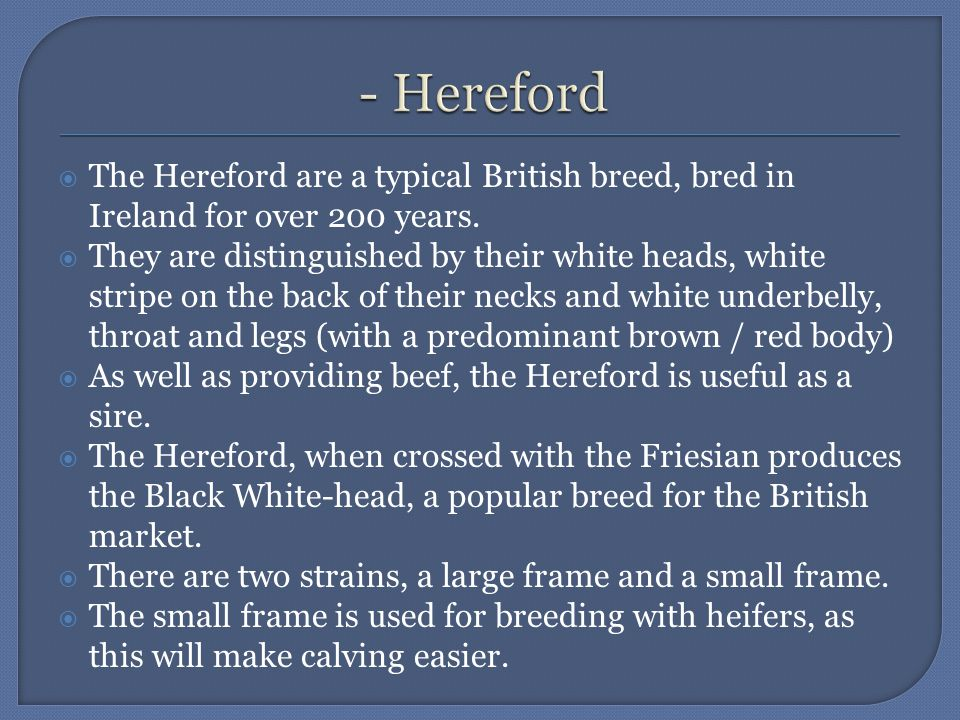  The Hereford are a typical British breed, bred in Ireland for over 200 years.