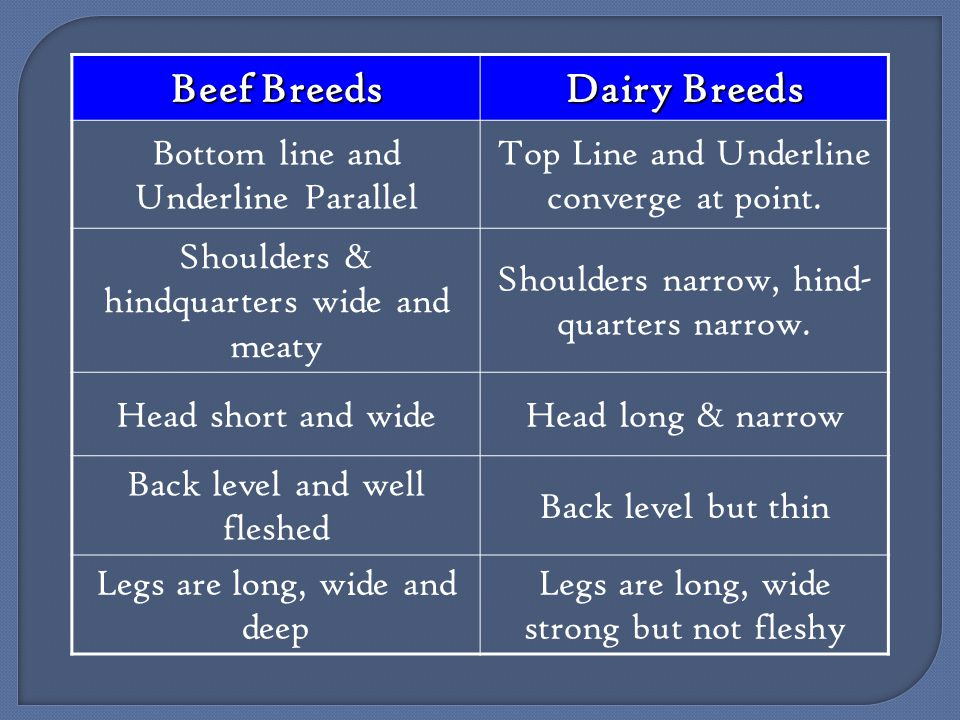 Beef Breeds Dairy Breeds Bottom line and Underline Parallel Top Line and Underline converge at point.