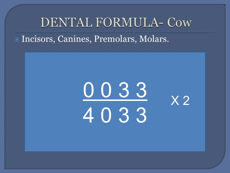  Incisors, Canines, Premolars, Molars. 0 0 3 3 4 0 3 3 X 2