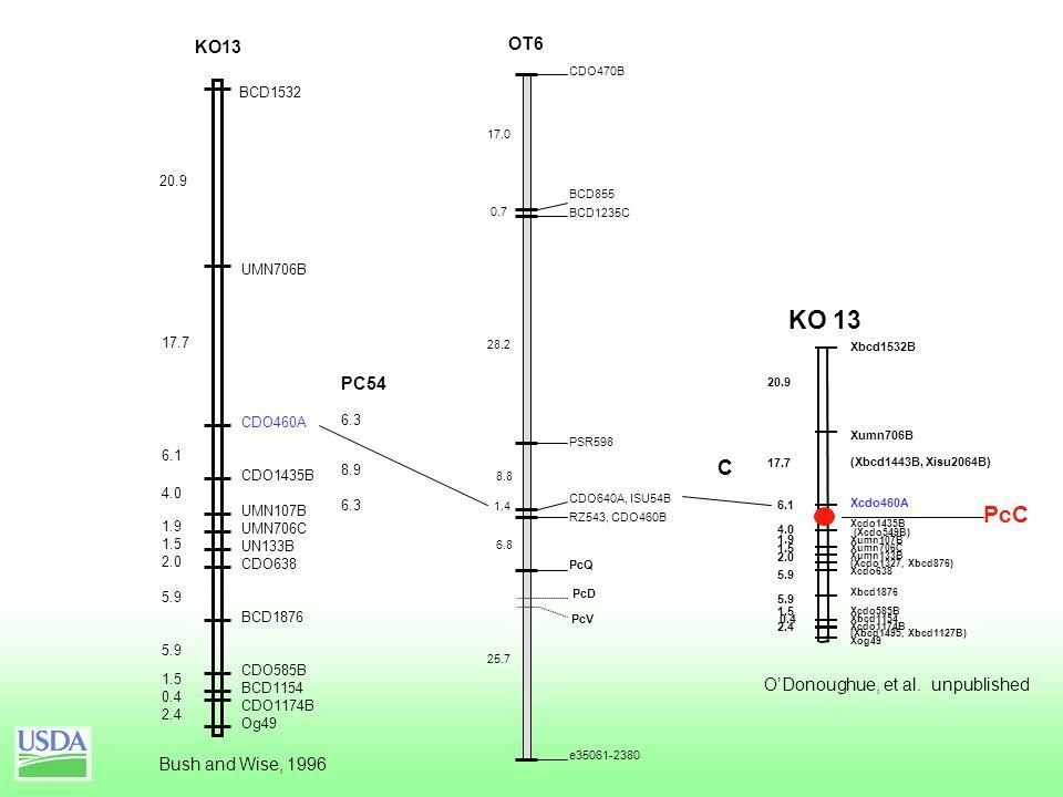 OT6 CDO470B BCD855 BCD1235C PSR598 CDO640A, ISU54B RZ543, CDO460B PcQ e35061-2380 17.0 0.7 28.2 8.8 1.4 6.8 25.7 PcD PcV Bush and Wise, 1996 KO13 20.9 17.7 6.1 4.0 1.9 1.5 2.0 5.9 1.5 2.4 0.4 Xcdo460A Xbcd1532B Xumn706B (Xbcd1443B, Xisu2064B) Xcdo1435B Xumn107B Xumn706C Xumn133B Xcdo638 Xbcd1876 Xcdo585B Xcdo1174B Xbcd1154 Xog49 (Xcdo549B) (Xcdo1327, Xbcd876) (Xbcd1495, Xbcd1127B) KO 13 C PcC O'Donoughue, et al.