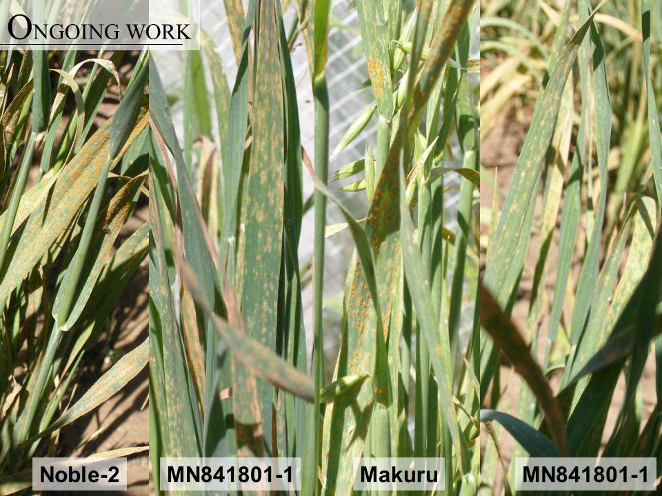 Noble-2MN841801-1 Makuru O NGOING WORK