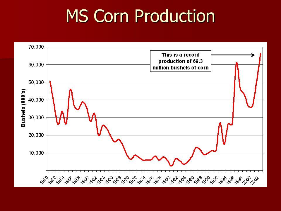 MS Corn Production