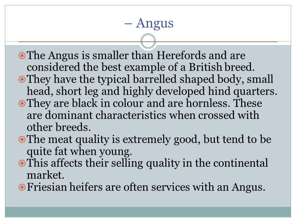 – Angus  The Angus is smaller than Herefords and are considered the best example of a British breed.