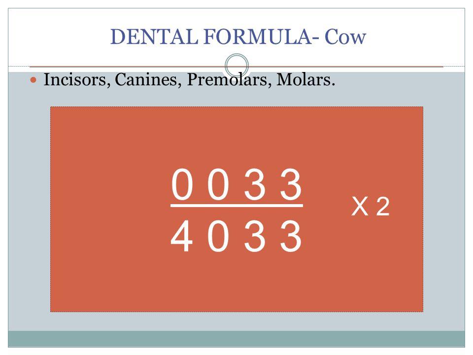 DENTAL FORMULA- Cow Incisors, Canines, Premolars, Molars. 0 0 3 3 4 0 3 3 X 2