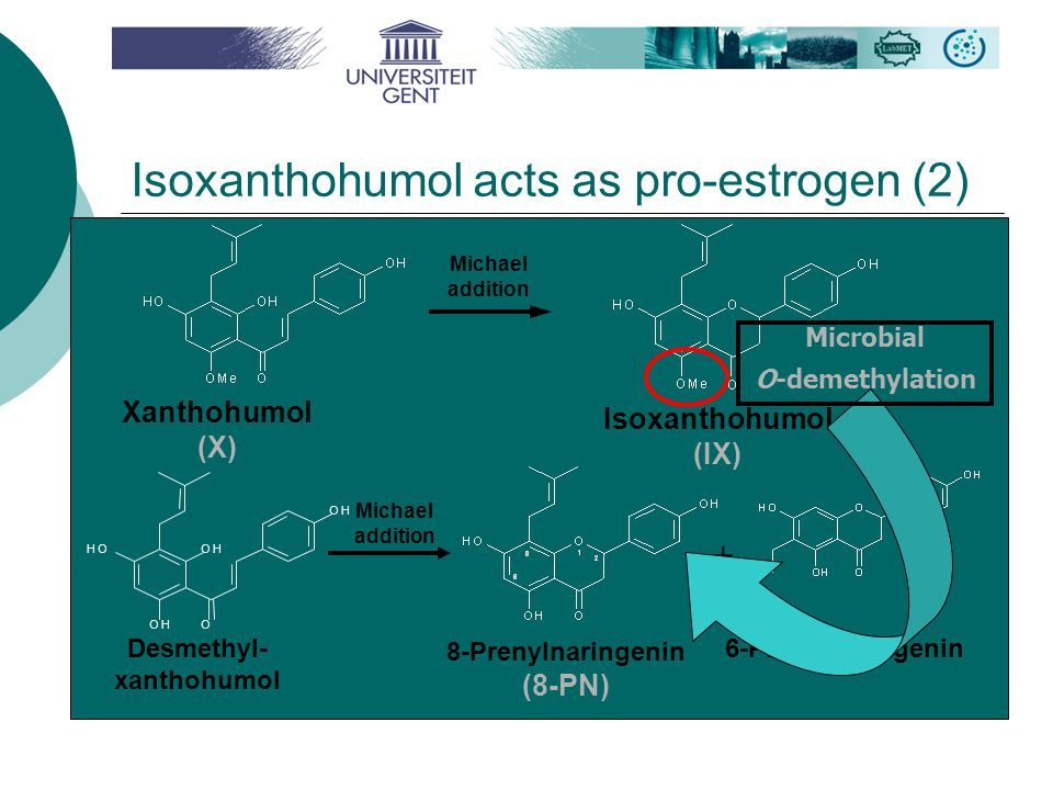 Isoxanthohumol acts as pro-estrogen (2) Desmethyl- xanthohumol + 6-Prenylnaringenin Xanthohumol (X) Isoxanthohumol (IX) Michael addition 8-Prenylnaringenin (8-PN) Michael addition Microbial O-demethylation OOH OH OH OH
