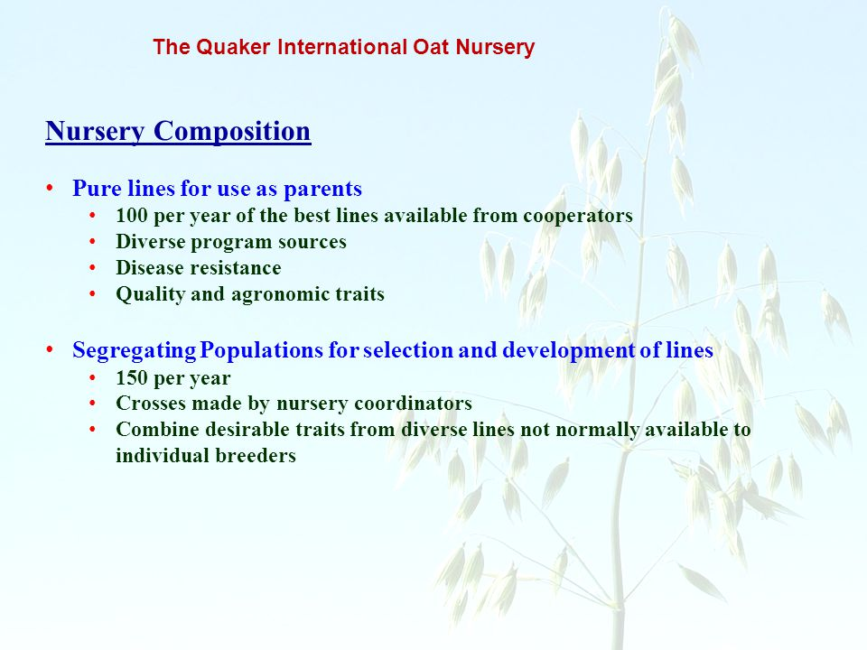 The Quaker International Oat Nursery Nursery Composition Pure lines for use as parents 100 per year of the best lines available from cooperators Diver