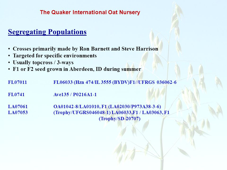 The Quaker International Oat Nursery Segregating Populations Crosses primarily made by Ron Barnett and Steve Harrison Targeted for specific environmen