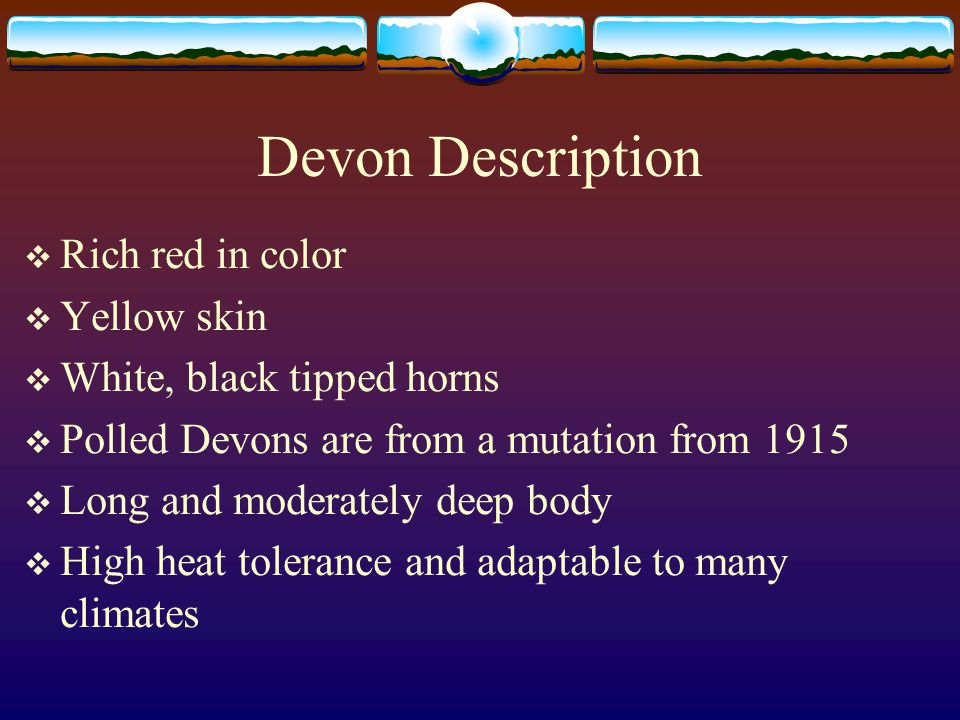 Devon Description  Rich red in color  Yellow skin  White, black tipped horns  Polled Devons are from a mutation from 1915  Long and moderately deep body  High heat tolerance and adaptable to many climates