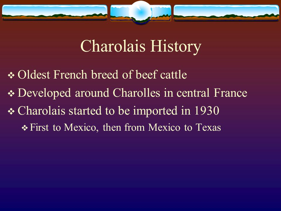 Charolais History  Oldest French breed of beef cattle  Developed around Charolles in central France  Charolais started to be imported in 1930  First to Mexico, then from Mexico to Texas