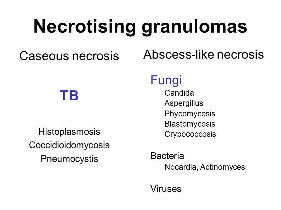 Necrotising granulomas Caseous necrosis TB Histoplasmosis Coccidioidomycosis Pneumocystis Fungi Candida Aspergillus Phycomycosis Blastomycosis Crypoco