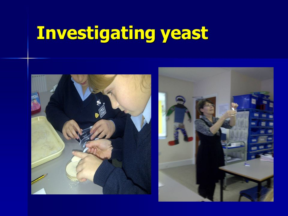 Investigating yeast