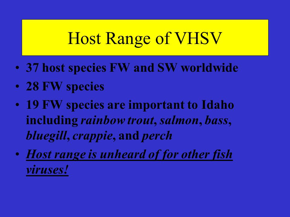 Host Range of VHSV 37 host species FW and SW worldwide 28 FW species 19 FW species are important to Idaho including rainbow trout, salmon, bass, blueg
