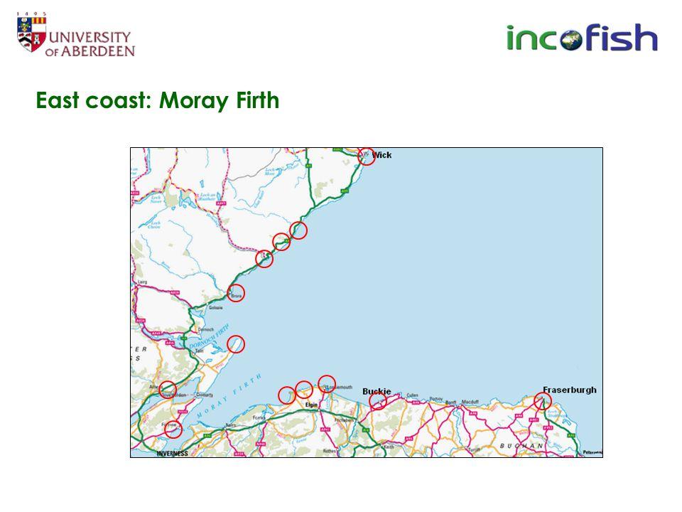 East coast: Moray Firth