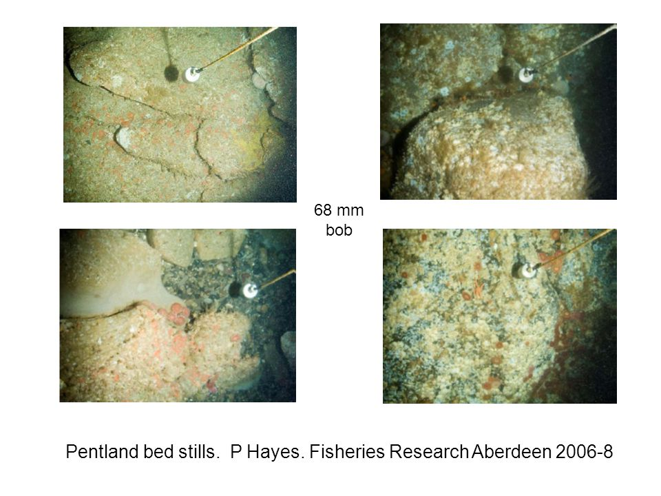 Pentland bed stills. P Hayes. Fisheries Research Aberdeen 2006-8 68 mm bob